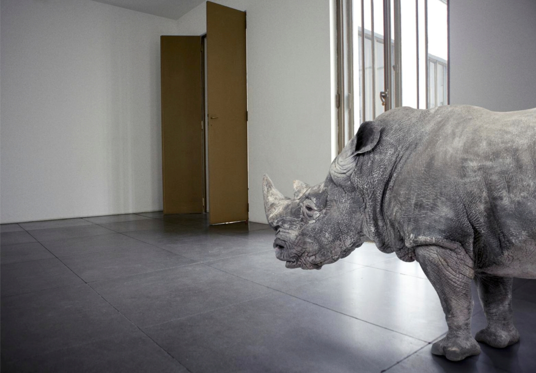 Borjana Ventzislavova - There Is No Rhino In This Room (2012)